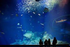 Thalassocosmos aquarium, Gouves, Heraklion Crete, Greece.