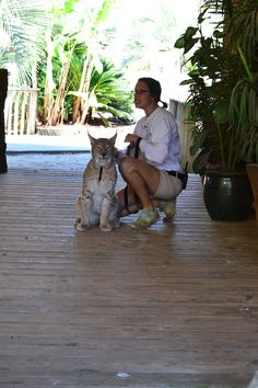 Say hello to Cassanova, a beautiful Eurasian Lynx! Alabama Gulf Coast Zoo, Eurasian Lynx, Make Time, Beautiful, Lynx