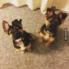 Double Trouble.