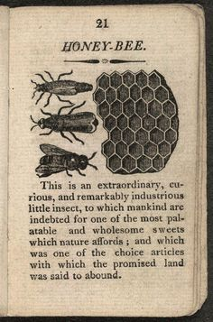 on this page the text about the honey bee is so true The History of Insects 1813