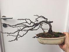windgepeitschter Apfelbaum