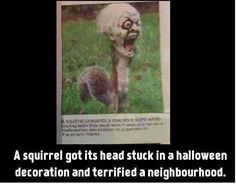 Poor squirrel..................but the picture is hilarious and I'd have gone straight to pick up my fam with weapons in hand thinking the zombie apocalypse had begun. Lol