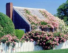 Nantucket, Massachusetts, United States, North America: Many cottages in 'Sconset—like this one—are hundreds of years old, and covered with climbing roses. I want climbing roses!