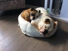 Super cute snuggle-buddies. I bet if they had a new, bigger bed, that they'd still use this one. LOL