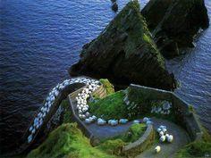 Sheep Highway in Dunquin Harbour, County Kerry, Ireland