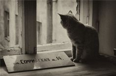 cat-cat 1)))