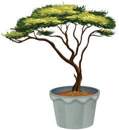 Topiary 1.6