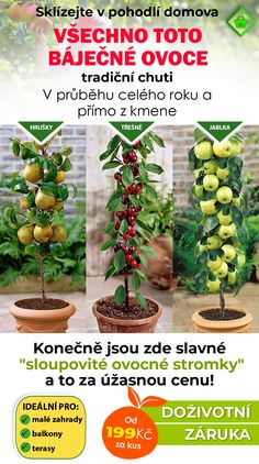 Fruit Vert, Plantar, Plantation, Bordeaux, Apple, Gardening, Interior, Nature, Garden
