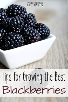 Tips for Growing Blackberries, including how to plant blackberries, how to grow blackberries in containers, how to care for blackberries, and more. Thornless Blackberries, Growing Blackberries, Growing Grapes, Growing Plants, Growing Vegetables, Blueberries, Veg Garden, Fruit Garden, Edible Garden