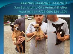 lizardmarsh: San Bernardino City CA: Urgent! Three little impou...