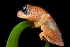 Polk-a-dot frog