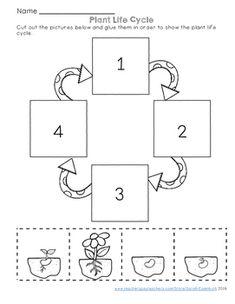 secuencia de la germinacion de una semilla para niños