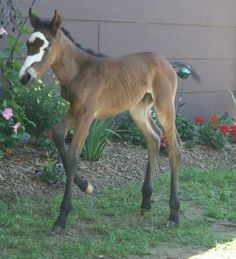 Such a Unique and Pretty Face! Foal is Absolutely Adorable!