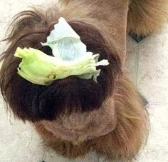 frannie with lettuce
