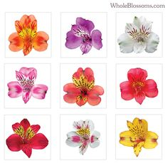 i want one of these as a tattoo... Alstroemeria=friendship and devotion