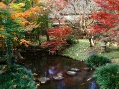Japanese gardens are highly staged, with precisely positioned plants, intricate pathways, water features and views beyond the landscape. Here, Japanese maples shade the banks of a pool. Stepping stones offer access across the still water.