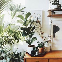 Don't we all feel better with the right light and good company?  :@herz.und.blut #urbanjunglebloggers