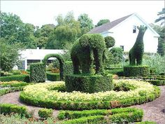 Green Animals Topiary Gardens is a Wildlife Park in RI. Plan your road trip to Green Animals Topiary Gardens in RI with Roadtrippers. Backyard Layout, Topiary Garden, Green Animals, Most Beautiful Gardens, Beautiful Places, Let The Fun Begin, Garden Park, Expensive Houses, Celebrity Houses