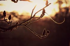 sunset Celestial, Sunset, Outdoor, Outdoors, Sunsets, Outdoor Games, The Great Outdoors, The Sunset