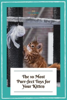 Are you buying a gift for the new kitten in your life? Here are ten of my favorite toys for kittens that will help relieve boredom and give them mental stimulation. Best Kitten Toys, Cat Toys, Gifts For Pet Lovers, Cat Gifts, Cat Lovers, Kitten Love, Cat Condo, Kittens