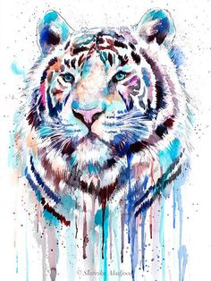 White Tiger Watercolor Painting Print By Slaveika Aladjova - White Tiger Watercolor Painting Print By Slaveika Aladjova Art Animal Illustration Home Decor Nursery Gift Wildlife Wall Art E A Printed Especially For You E A Directly Form The Art Watercolor Tiger, Tiger Painting, Watercolor Animals, Painting Prints, Watercolor Paintings, Tiger Sketch, Tiger Drawing, Animal Paintings, Animal Drawings
