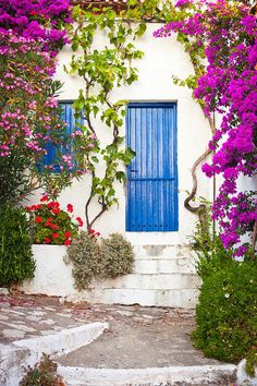 Colorful plants in the Old Village, Alonissos, Greece Greece Art, Front Door Colors, Thing 1, Colorful Plants, Mediterranean Homes, Bougainvillea, World Best Photos, Pink Aesthetic, Fine Art America