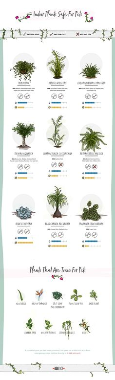 poisonous plants for dog infographic