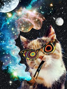 High Cat | Eugenia Loli collage