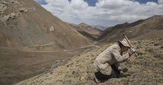 China and India File Rival Claims Over Tibetan Medicine - The New York Times