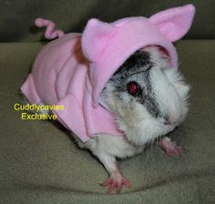 OMG! A piggie dressed as a piggie! I love this and might need to get it for my Mocha =:)