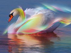Swan Rainbow 3D Animal Wallpaper Free Download #1928