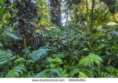 Tropical garden Photos et images de stock | Shutterstock