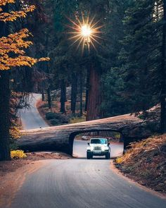 A trip into Sequoia National Park California. Photo by A trip into Sequoia National Park California. Photo by Sequoia National Park California, California Usa, Sequoia California, California California, Cool Places To Visit, Places To Go, The Road, Destinations, Whatsapp Wallpaper