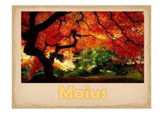 Maius, por Patricia Luna