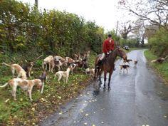 Irish Hunt