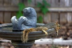 It's still so hot in Texas, squirrels have taken it to the next level to keep cool! - Imgur
