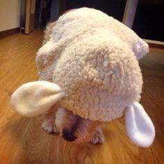 Sheep coat. 来年の干支の羊さんコート!