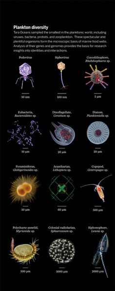 232 Best Classification Images In 2019 Life Science