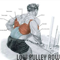How to Low Pulley row