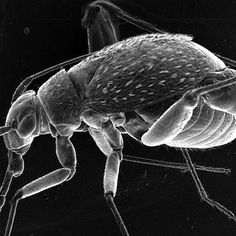 Those cool pictures from electron microscopes of fleas, bedbugs and other tiny creatures have one drawback: The animals die during the process, which means scientists miss out o...