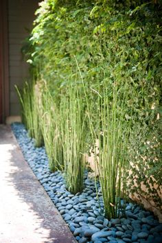 Bamboo in stone bedding    I'm thinking using these rocks in my runnel