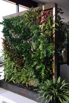 un beau mur végétal avec une grille et un cadre en bois