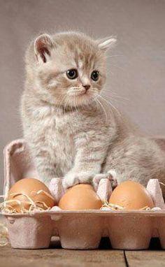 Solo quiero huevo revuelto