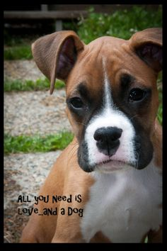 Boxer photo art card 5x7 All you need is love.