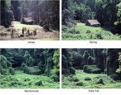 10 of the World's Worst Invasive Species