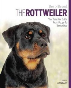 The Rottweiler: Your Essential Guide from Puppy to Senior Dog
