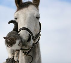 love: it transcends the boundaries of color, creed, and even species.