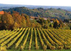 Weinland im Herbst, © TV Schilcherland Stainz-Reinischkogel Salzburg, Alps, Vineyard Vines, Vienna, Austria, Fall Decor, Skiing, Summertime, Europe