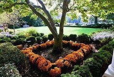 fall planting ideas