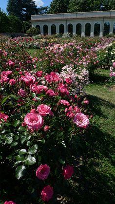 Rose Garden at Villa Reale, Monza, Italy